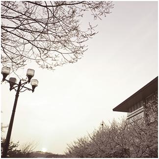 circle-image01